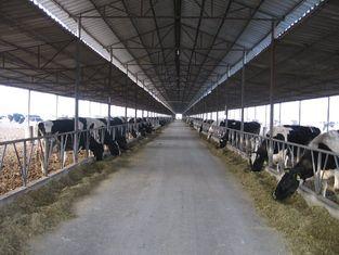 China Pre-gebouwde Staal Ontwerpende Systemen die Koe/Paard met Dakcomités kweken leverancier